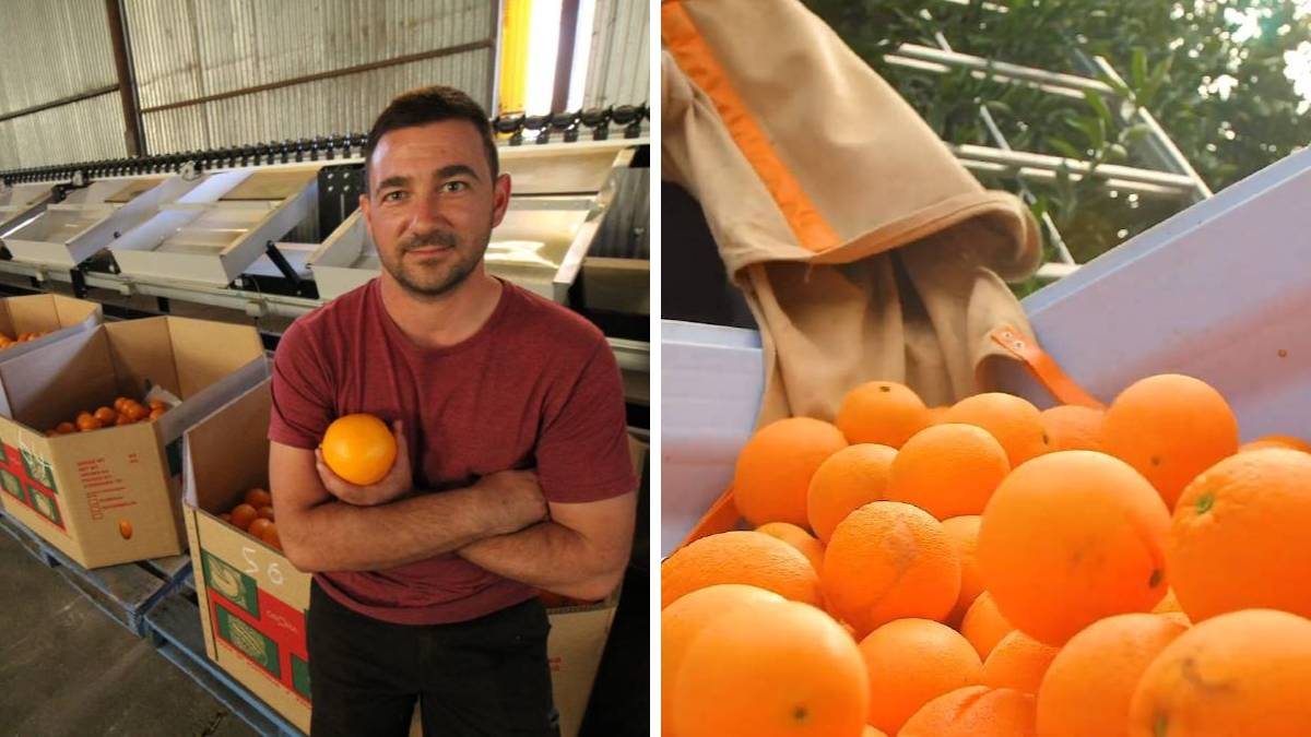 MIA citrus grower Vito Mancini (pictured), national peak industry body Citrus Australia and experienced recruitment company, FIP Group, have all called on Riverina growers to make themselves aware of the shortage of labour options and to work on solutions.